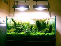 would love to fall asleep and wake up to the sight of this...ahhh, relax with an aquarium