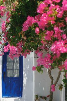 Wedding in Santorini Santorini Wedding, Santorini Greece, Destination Wedding, Plants, Destination Weddings, Plant, Planets