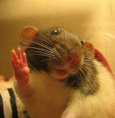 Live long and prosper! | 29 Animals Waving Goodbye For The Winter