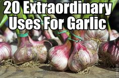 Did you know garlic could be used as an aphrodisiac, road de-icer, fish bait, gas preventer, skin cleanser and so much more?  Nope, me neither!  If you love to discover some of the more uncommon uses for everyday products then you'll love this article I've found revealing 20 Unusual Uses For Garlic.
