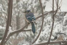 Photo Gallery :: Birds of the Northeast US :: 174