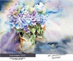 hydrangea VIII / Watercolour 30x40cm on Fabriano CP © janinaB. 2016