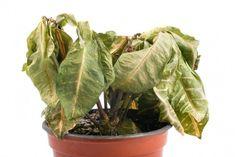 Identifica las enfermedades que pueden tener tus plantas observando el color de sus hojas, y aprende cómo combatirlas.