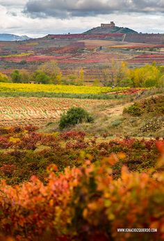 Autumn in La Rioja Spain