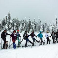 Utila, Pine Forest, Romania, Journey, Snow, Activities, Adventure, Outdoor, Outdoors