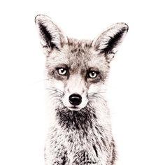 Fox - printed magnetic wallpaper