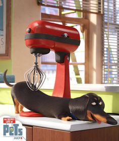 Buddy's trick to a great post-workout massage. | The Secret Life of Pets | In Theaters July 8