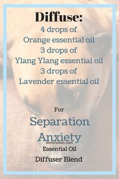 Does your dog suffer from separation anxiety? Diffuse orange essential oil, ylang ylang essential oil, and lavender essential oils while you are gone from the home and this should help calm dog  demirviews.com