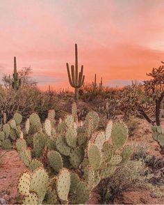 ARNHEM on Lost amongst the desert sunsets Giving us some cactus garden inspo. Gorgeous capture via joshuatreehouse Cactus Care, Cactus Flower, Cactus Cactus, Indoor Cactus Plants, Flower Plants, Desert Aesthetic, Nature Aesthetic, Ficus, Cactus Paint