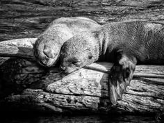 sleaping seals. by anDrea Fritz on 500px