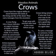 Crow Magick and Hoodoo Crow Magick and Hoodoo,Animals & Creatures Crow Magick and Hoodoo Information Related posts:- Mcr memesMCR and NME Awards 2011 funny by alamniezmusilaxd on DeviantArt - Mcr memesAll things truly wicked. Hoodoo Spells, Magick Spells, Witchcraft, Wiccan Spell Book, Witch Spell, Spell Books, Voodoo Hoodoo, White Magic, Book Of Shadows