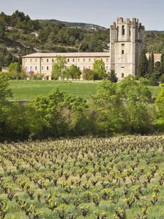 View of the Abbey of Sainte-Marie D'Orbieu, Lagrasse, across Vineyards in Languedoc-Roussillon, Fra