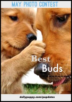 "Showcase your puppy and their best friend! Pupdate a photo with #BestBuds to enter to win and ""Woof of the Week""!"