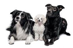 8 táticas para seu cachorro não passar doenças, nem ser infectado