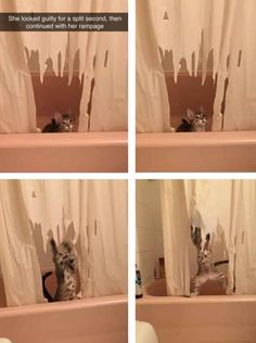 The rampaging cat: