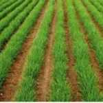 Manual preguntas frecuentes en la producción ecológica Outdoor Decor, Home Decor, Home, Organic Matter, Vertical Vegetable Gardens, Planters, Vegetable Garden, Terrace, Gardens