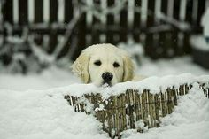 Puppy and snow
