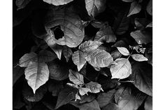 Black and white Woodland Photograph Rustic by LostInTheValleyPhoto