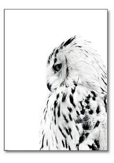 Poster met witte uil