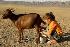 This is a girl from Mongolian and u can see she is trying to get milk from that goat