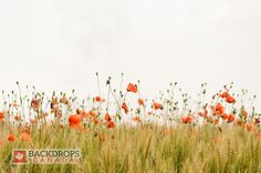 Orange Wildflowers Photography Backdrop. Order online at www.backdropscanada.ca