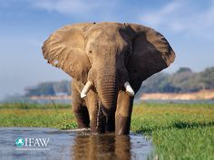U.S. to Offer $1 Million Reward in Fight Against Wildlife Trafficking     Every birthday Gigeo greeting you send from http://WhoLovesYou.ME helps animals world wide.   LIKE us on http://www.facebook.com/BirthdayGigeo and help protect the world's wildlife.   #animalphotos #IFAW