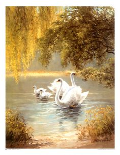 Swans: 'Schwane' by Max Weber Print 27x37cm £14.99 #swans