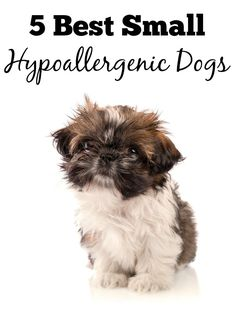 Looking for a new furry friend that's not a killer on allergies? Check out our picks for the 5 all-around best small hypoallergenic dogs for families.
