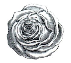 """Deep Red Cling Mount Rubber Stamp. This quality cling-mount rubber stamp is made from deeply etched, precision trimmed premium red rubber. Rose Engraving. With 1/8"""" thick grey foam for a smooth impression on uneven or textured surface. 