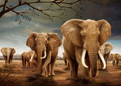 3D Lenticular Magnet: Elephants