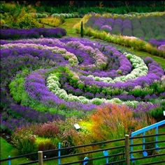 This planting design reminds me of a labyrinth. it would be so cool to make one out of plants! like lavender..... soothing :)