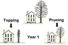Topping vs. pruning Trees, Garden, Home Decor, Garten, Decoration Home, Room Decor, Tree Structure, Lawn And Garden, Gardens