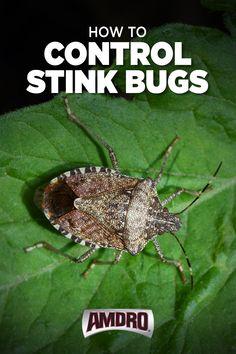 Garden Bugs, Garden Yard Ideas, Garden Pests, Lawn And Garden, Bug Identification, Bug Spray Recipe, Diy Pest Control, Stink Bugs, Insect Pest