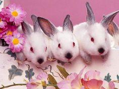 rabbit pictures desktop by Jaxsen Mason Rabbit Life, House Rabbit, Pet Rabbit, Funny Easter Bunny, Hoppy Easter, Cute Bunny, Bunny Bunny, Adorable Bunnies, Baby Animals