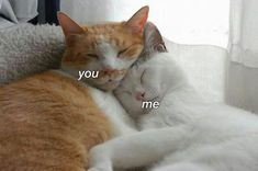 Image about love in ~Cats🐱 by 🌼°xLailax°🌼 on We Heart It Animals And Pets, Baby Animals, Funny Animals, Cute Animals, I Love Cats, Cute Cats, Cat Couple, Cute Love Memes, Infp