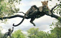 ¿Que otro se anima a tocarle la cola al Leopardo?