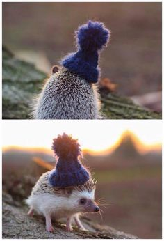 A cap is the perfect accessory for a well-dressed porcupine!