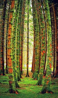 20 Amazing Pictures of Nature's Creativity - Trees - Character is like a tree and reputation like a shadow. The shadow is what we think of it; the tree is the real thing. All Nature, Nature Tree, Amazing Nature, Flowers Nature, Bonsai, Images Cools, Beautiful Places, Beautiful Pictures, Cool Pictures Of Nature