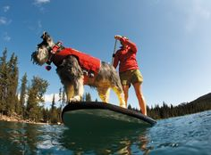 If you enjoy water activities and like taking your furry friend along with you, you might want to consider the dog´s safety when boating, surfing, kayaking and paddle boarding. The Float Coat by Ruffwear is the ultimate in canine flotation and wa Dog Life Vest, Sup Girl, Kayak Accessories, Dog Safety, Water Safety, Guide Dog, Swim Lessons, Dog Lover Gifts, Four Legged