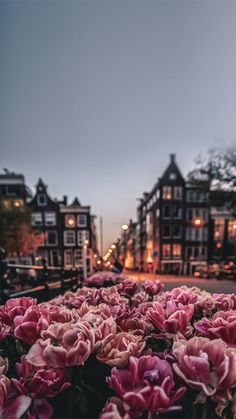 iPhone and Android Wallpapers: Amsterdam Wallpaper for iPhone and Android photography wallpaper Flower Phone Wallpaper, Iphone Background Wallpaper, Pastel Wallpaper, Nature Wallpaper, Iphone Backgrounds, Wallpaper Wallpapers, Spring Wallpaper, Pretty Wallpapers For Iphone, Wallpapers Android