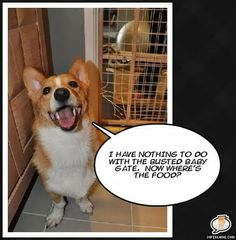 The Daily Corgi: Momo Monday: Vintage Daily #Corgi Goodness!