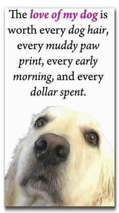 dog care,dog grooming tips,dog ideas,dog nail trimming,dog ear cleaner Best Treats For Dogs, Best Dogs, Dog Treats, Schnauzers, Dog Quotes Love, Dog Sayings, Pet Quotes Dog, Dog Poems, Dog Rules