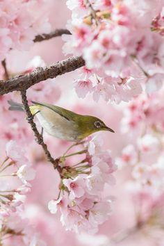 春色に染まる #桜 #CherryBlossom