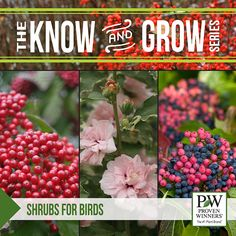 Learn here how-to bring the birds, butterflies and hummingbirds into your yard by providing the shrubs that protect and nurture these beauties.  emfl.us/rCKd