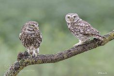 Mom and dad.... (Arno van Zon / Heemskerk / The Netherlands) #DSC-RX10M3 #animals #photo #nature
