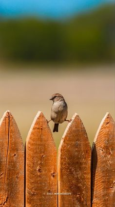Strech on the fence