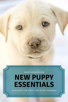 If you are about to be a first time puppy parent you may be wondering what you need for your new puppy. There are 7 essential items you need to have before you bring home your puppy. But all puppies are different, which means you need to decide which of the many choices you have will best fit your pup. Join us as we go over the basic items you need and provide tips on how to select the best items for your pup. (#Whatdoyouneedforanewpuppy?, #Musthaveitemsforyournewpuppy, #Newpuppy) Puppies Tips, Cute Puppies, Dogs And Puppies, Puppy Care, Dog Care, Puppy Chew Toys, Dog School, Happy Puppy