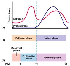 The Effects of Your Menstrual Cycle on Training and Competition