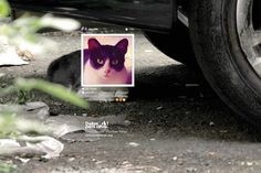 Dallas Pets Alive: Petstagram, #prrrprrrprrr