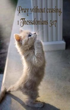 Pray without ceasing.1Thessalonians 5:17